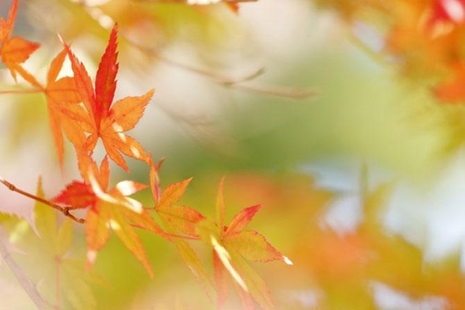 仙台中央歯科_10月・11月の診療変更について